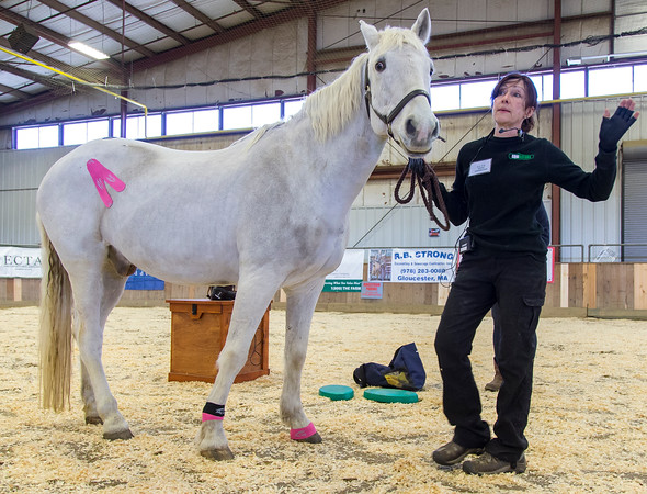 PARKER FISH/ Photo. Christine Taylor gives a live demonstration during the annual equine horse expo. 4/30/16