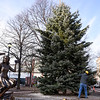 Holiday Tree at Lappin Park in Salem