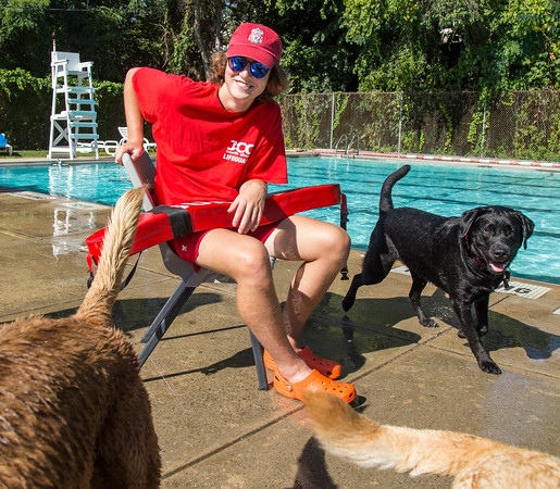 PARKER FISH/ Photo. Life Guard Liam Cusack of Marblehead watches over several dogs during the first ever Doggie Dip at the Jewish Community Center of the North Shore. 9/17/16
