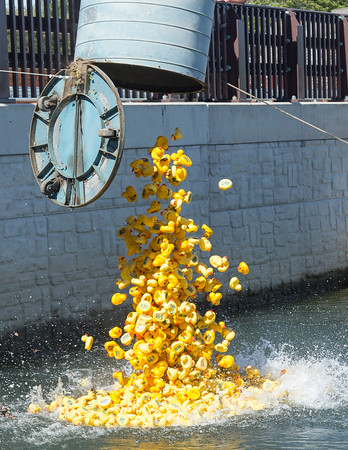 PARKER FISH/ Photo. Hundreds of ducks fall to the water to mark the beginning of the Danvers Kiwanis Club annual rubber duck race. 9/17/16