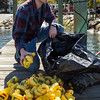 PARKER FISH/ Photo. Ryan Kucinski helps clean up rubber ducks after the annual rubber duck race held by the Kiwanis Club of Danvers. 9/17/16
