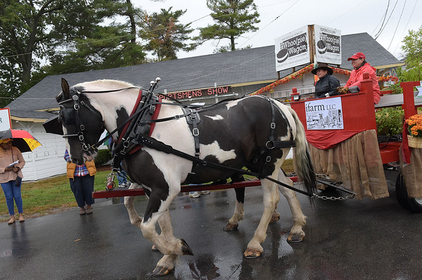 TIM JEAN/Staff photo<br /> Two North American Spotted Draft Horses, Pitch and Patch pull a wagon from ifarm, LLC., in Boxford thru the fair grounds during the Grand Parade and opening ceremonies of the Topsfield Fair. 9/30/17
