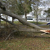 Trees down at Salem Willows