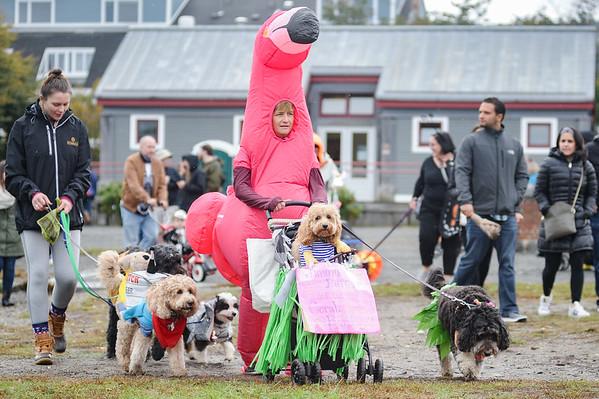 Howl-O-Ween pet parade