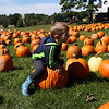 HADLEY GREEN/ Staff photo<br /> Nico Materazzo sits on a pumpkin while exploring Marini Farm in Ipswich.<br /> <br /> 09/27/2018