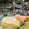 AMANDA SABGA/Staff photo <br /> <br /> The top ten heaviest pumpkins are lined up after being weight during the Giant Pumpkin Weigh Off on the first night at Topsfield fair.<br /> <br /> 9/28/18