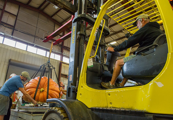 AMANDA SABGA/Staff photo <br /> <br /> Jerry Swindell guides a pumpkin to the scale using a forklift during the Giant Pumpkin Weigh Off on the first night at Topsfield fair.<br /> <br /> 9/28/18
