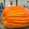 AMANDA SABGA/Staff photo <br /> <br /> Norm Gansert, of Rhode Island, looks on at his giant pumpkin that won the Howard Dill Best Looking Pumpkin award during the Giant Pumpkin Weigh Off on the first night at Topsfield fair.<br /> <br /> 9/28/18