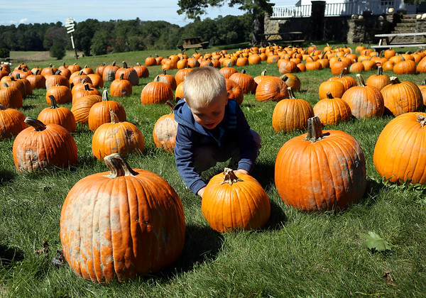 HADLEY GREEN/ Staff photo<br /> Luca Materazzo of Lynnfield looks at pumpkins for sale at Marini Farm in Ipswich.<br /> <br /> 09/27/2018