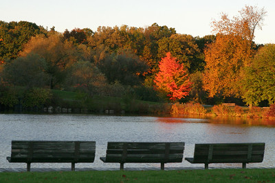 Autumn in Ann Arbor (Fuller Park)