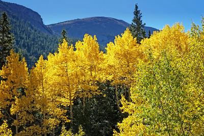 Fall Colors Along Guanella Pass