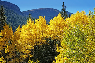 Fall Colors Along Guanella Pass