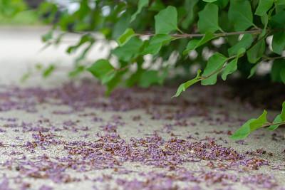 Lilac Debris