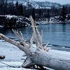 Gooseberry Driftwood