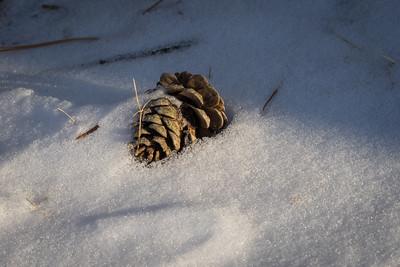Winter Cone