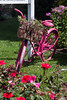 Cape May Pink Bicycle