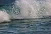 tern Feeding in Waves