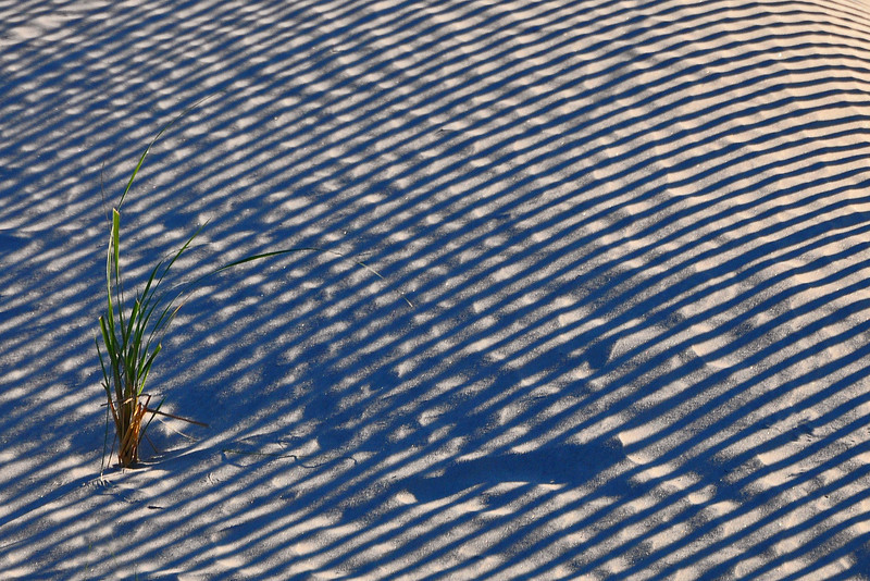 Grass in the sand with shadows - Wildwood Crest, NJ - 2011