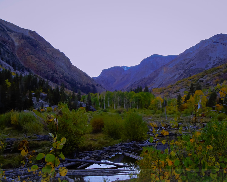 Lundy Canyon Beaver Pond