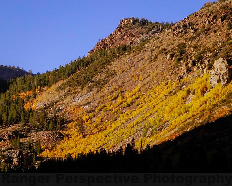 Fall Colors along the Warren Fork of Lee Vining Creek