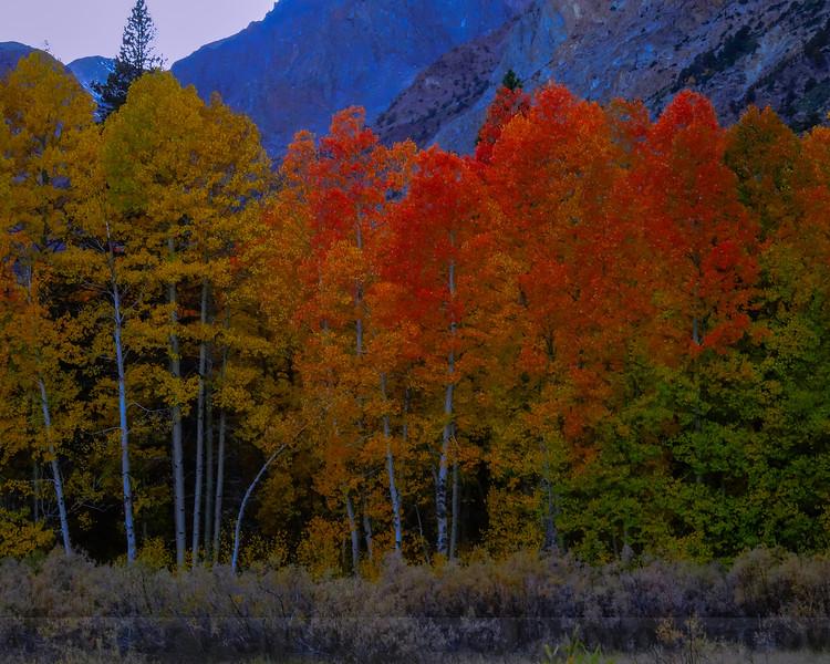 Lundy Canyon Aspen #2