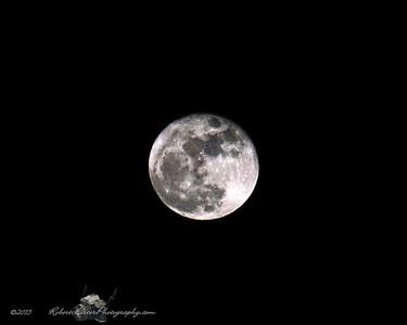 2015-11-26_DSC02924C_Moon,Largo,Fl_