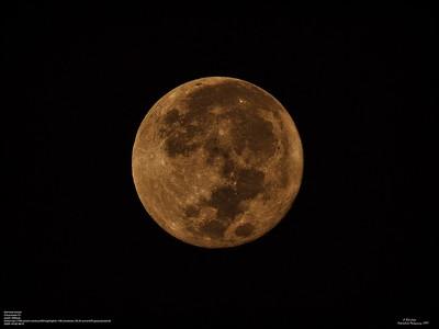 PA020001_Harvest moon