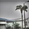 2016-09-03_P9030003_tonton,pain,lum6 0_rain,Clearwater,Fl