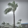 2016-09-03_P9030002_tonton,pain,lum6 0_rain,Clearwater,Fl