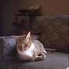 04/68 Monterey<br /> Ivan looking contemplative