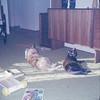 03/73 Ivan and Samantha