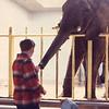 04/75 Washington Zoo<br /> John Jen feeding the elephant