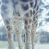 04/1981 Delft NL Safari Park