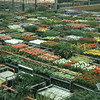 04/1981 Aalsmeer NL Flower Exchange