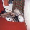 02 80 Partenkirchen Boots