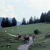 05 81 Garmisch volksmarsch
