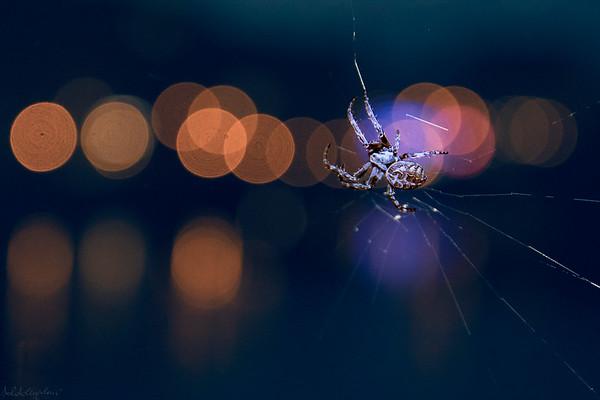 Spider Bokeh