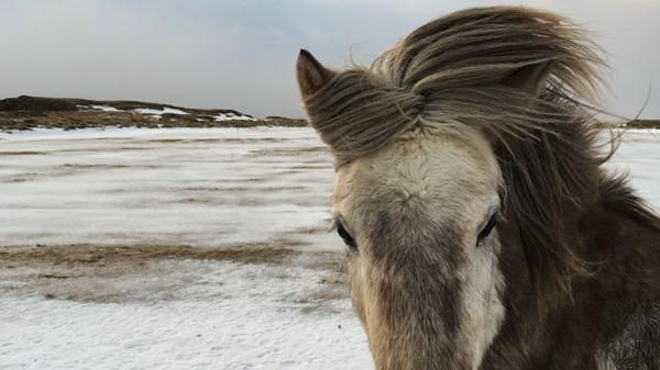 Acquainted - Iceland