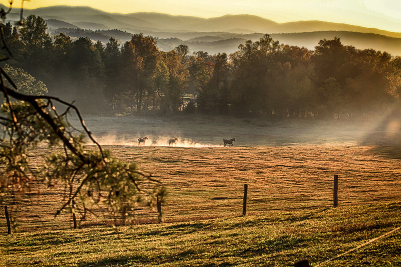 Cades Cove, late afternoon as the horses are turned out to pasture.