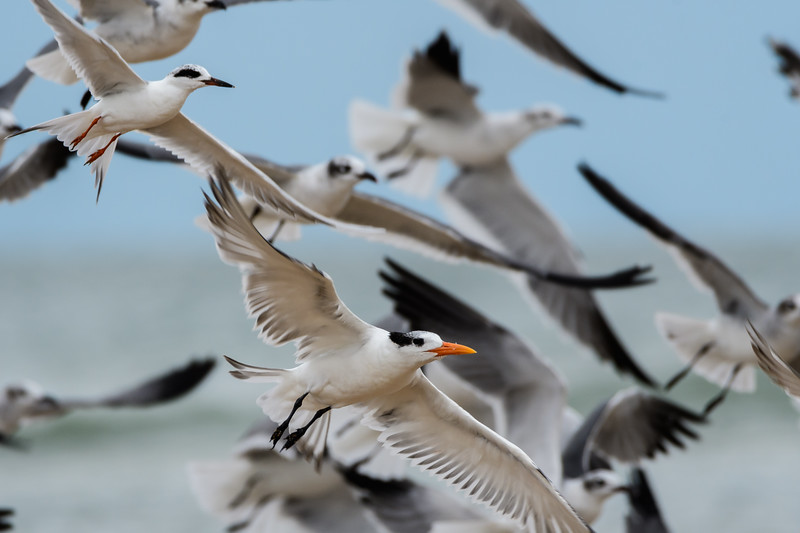 Flock of Seagulls and Terns
