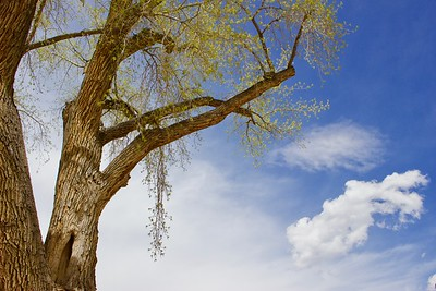 Ghost Ranch Tree and Sky