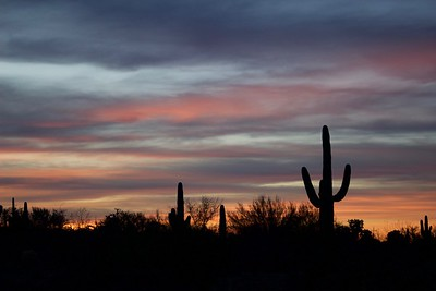 Sunset, Sonoran Desert