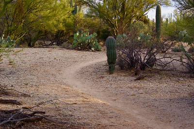 On the Path, Sonoran Desert