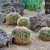 05-13-06-cactus-DSC06288