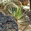 05-13-06-cactus-DSC06286
