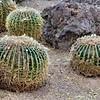05-13-06-cactus-DSC06289