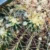 05-13-06-cactus-DSC06282