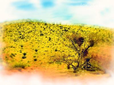 Red Rock Canyon Art