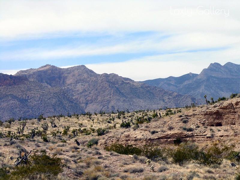 Red Rock Canyon, Las Vegas, Nevada. Photographs by Deborah Carney. Image #DSCN4395