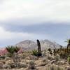 Red Rock Canyon, Las Vegas, Nevada. Photographs by Deborah Carney. Image #DSCN4393